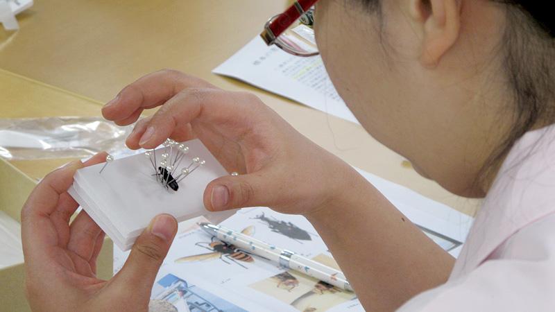 【受講者募集中】自然解説者、理科の先生、展示担当者のための、五感と心で伝わる!「昆虫・生きもの標本」作製 初級講座(Ⅰ~Ⅲ) ~3つの標本作成法を1日で学べる