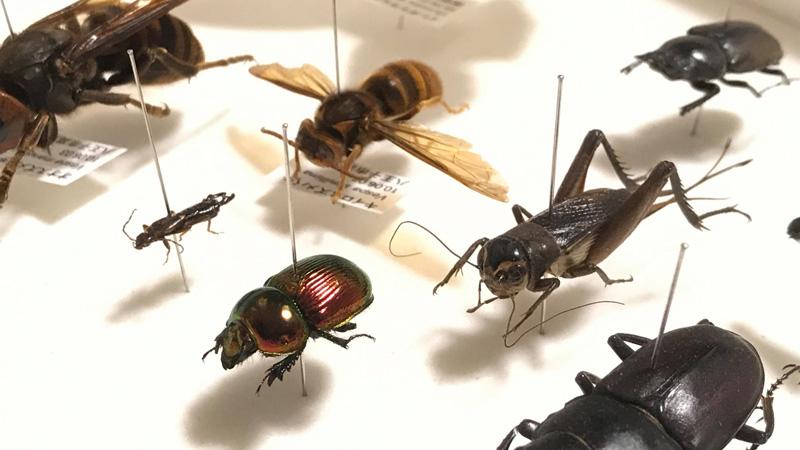 昆虫標本800×450