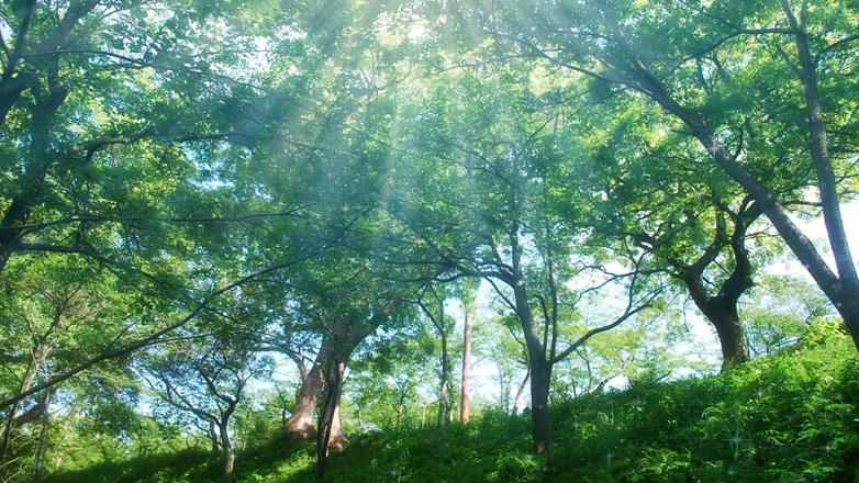 """""""森と自然を活用した保育・幼児教育""""に関する自治体勉強会(1/26)/   森林環境教育 活動報告・意見交換会(1/27)"""