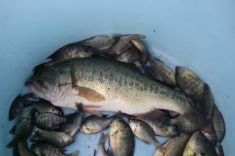 第十三回「外来魚情報交換会」