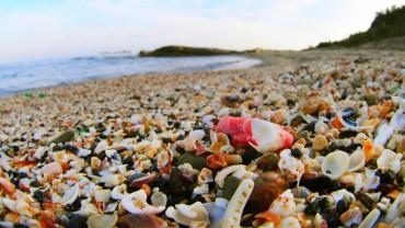 海からのおくり物♪ ビーチコーミング&貝殻押し染めMy巾着袋作り