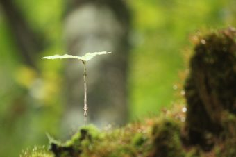 里山リトリート~自然と人と自分と対話する・森でののんびり時間~
